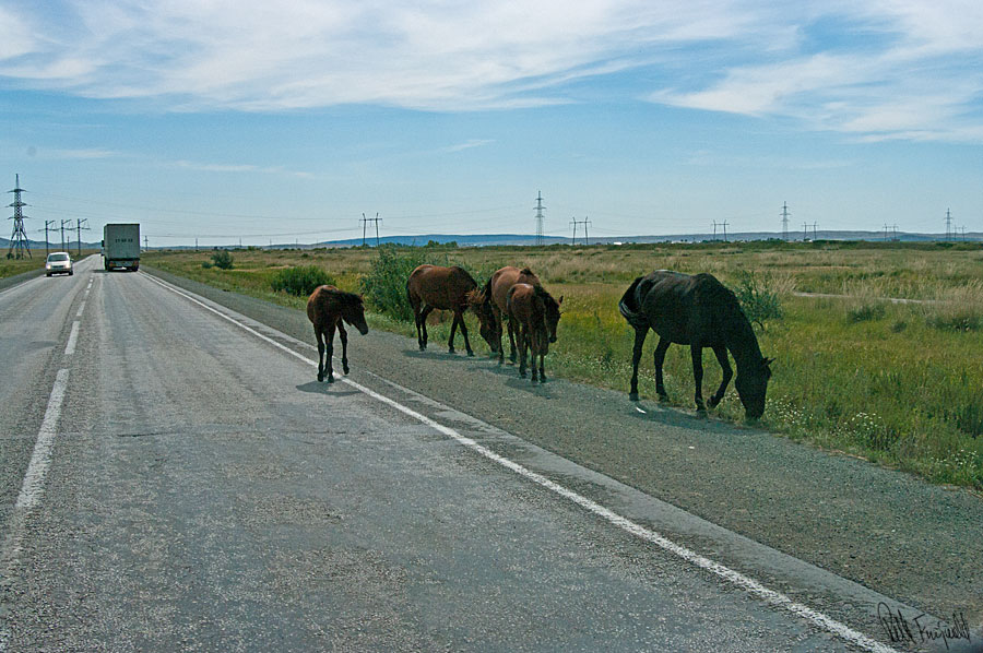 hestepaavejen